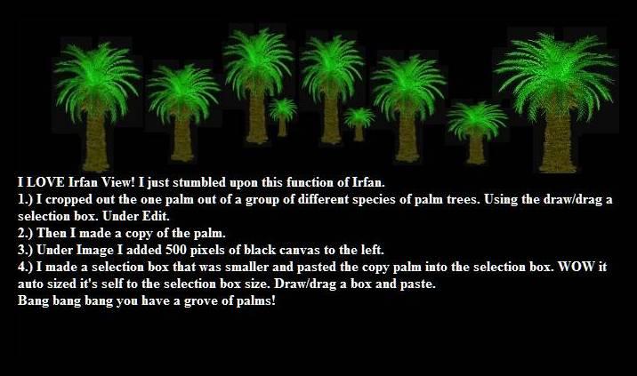 IrFan-PalmsTute1.jpg