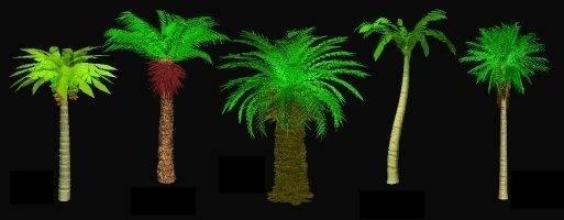 IrFan-PalmsTute2.jpg