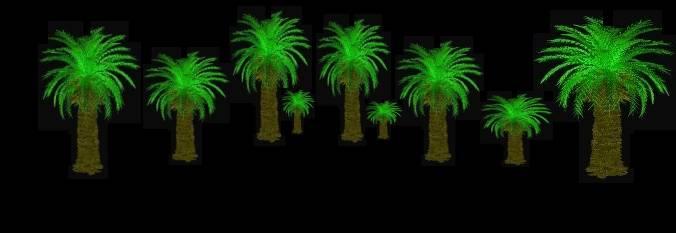 IrFan-PalmsTute3.jpg